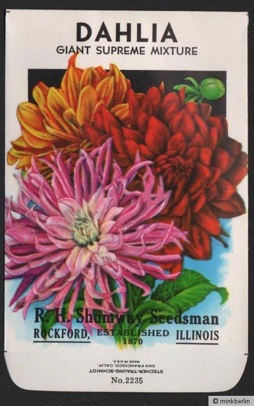 Samentütchen ohne Inhalt - Tüte für Samen - Dahlien - USA - ca. 1950 - # 110