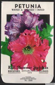 Samentütchen ohne Inhalt - Tüte für Samen - Petunien - USA - ca. 1950 - # 107