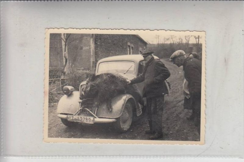 JAGD - HUNTING - JACHT - CHASSE - CACCIA - CAZA - LOWIECTWO - Wildschwein - Photo