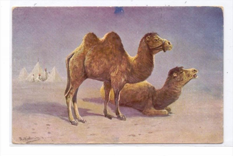TIERE - KAMELE / Camel / Chameau / Cammello / Kameel / Camello - Künstler-Karte
