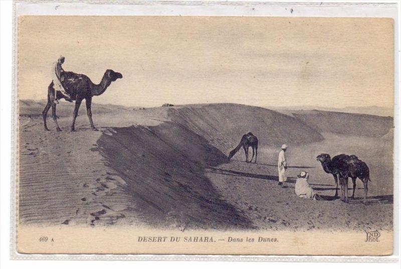 TIERE - KAMELE / Camel / Chameau / Cammello / Kameel / Camello - Sahara
