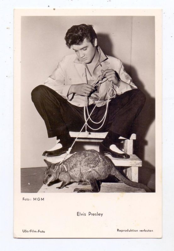FILM - STARS - ELVIS PRESLEY and Wallaby, 1957, Jailhouse Rock Production, MGM - UFA