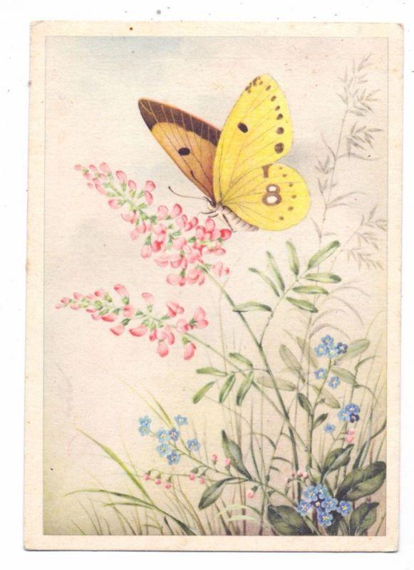 SCHMETTERLINGE / Flinder / Butterfly / Papillon - Künstler-Karte