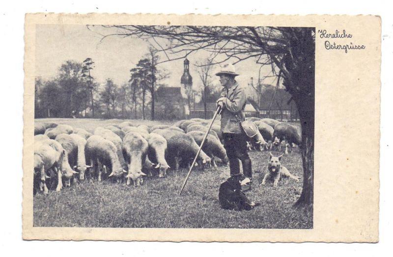 LANDWIRTSCHAFT - Schafhirte, Schafherde, Hirtenhunde, 1938