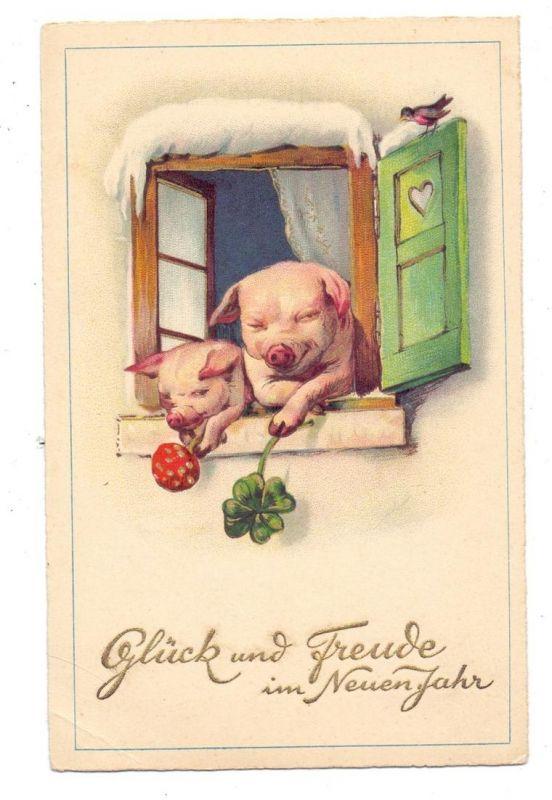 SCHWEINE - Pigs / Porcs / Maiali / Varkens / Cerdos - Zwei Schweine aus dem Fenster lehnend mit Glückspilz und Kleeblatt