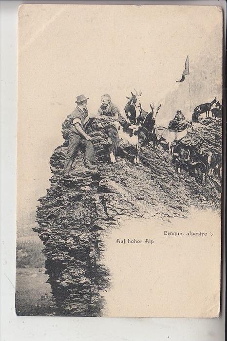 TIERE - ZIEGEN / Goats / Geiten / Chevres - Schweiz 1903