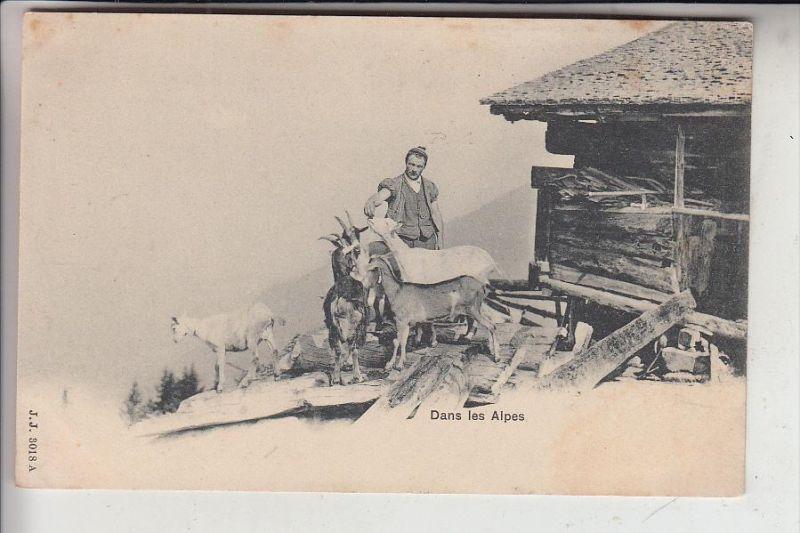 TIERE - ZIEGEN / Goats / Geiten / Chevres - Schweiz