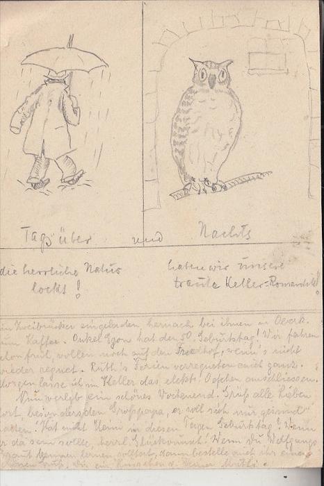TIERE - VÖGEL - EULEN / Owls / Buho / Hibou / Uil / Gufo - Handzeichnung, 1940