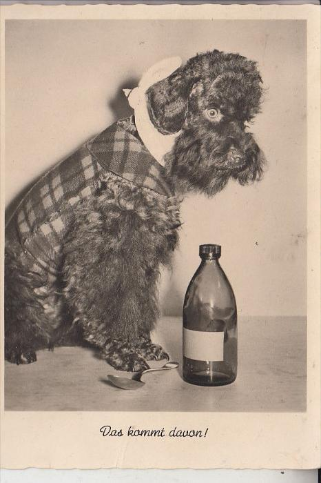 HUNDE - PUDEL / Poodle / Caniche / Barboncino / Poedel