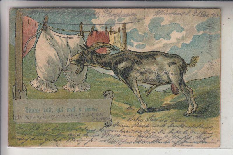 TIERE - ZIEGEN / Goats / Geiten / Chevre, Humor, 1901