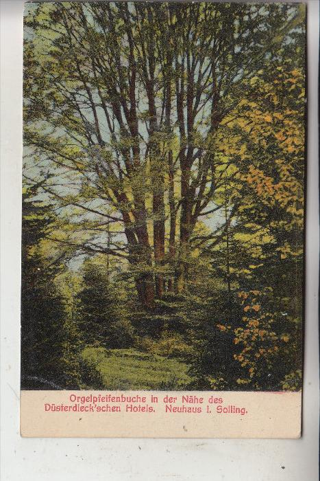 FLORA - Orgelpfeiffenbuche, Neuhaus / Solling, 1925