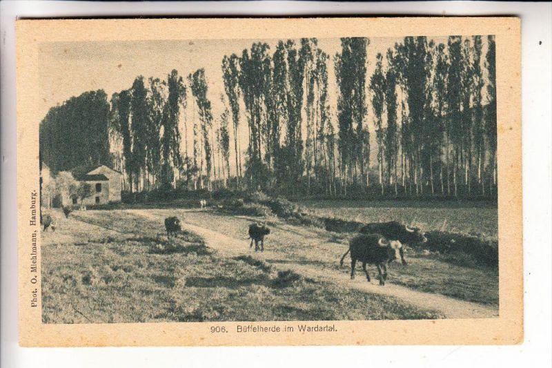 MAZEDONIEN- VARDA / WARDA-Tal, Büffelherde