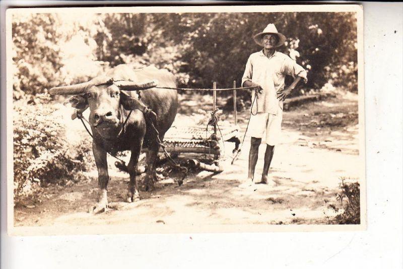 PILIPINAS / PHILIPPINEN, Bauern-Fahre auf den Philippinen, Wasserbüffel, Photo-AK