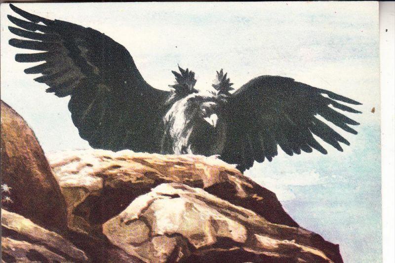 MONGOLIA / MONGOLEI - Künstler-Karte, Der große Adler der Mongolen