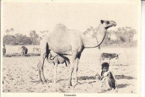 ERITREA, Cammello / Camel / Kamel