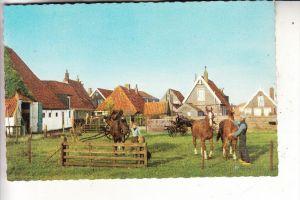 NL - NOORD-HOLLAND - TEXEL, bij Den Burg, paarden