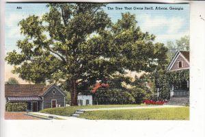 USA - GEORGIA - ATHENS, Tree that owns itself