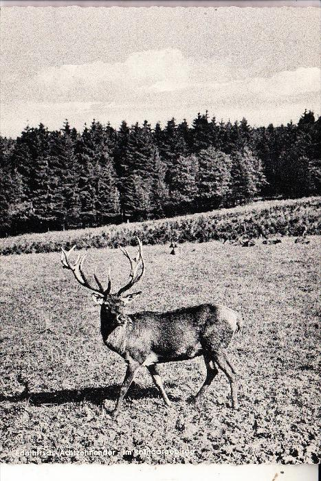 JAGD - HUNTING - JACHT - CHASSE - CACCIA - CAZA - LOWIECTWO - Hirschgehege Rimsecke