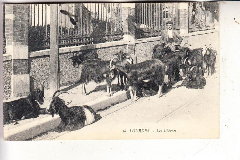 TIERE - ZIEGEN / Goats / Geiten / Chevre - Les Chevres Lourdes, 1913