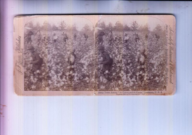 USA - LOUISIANA - Picking cotton, Stereo Photo 1892 Underwood & Underwood