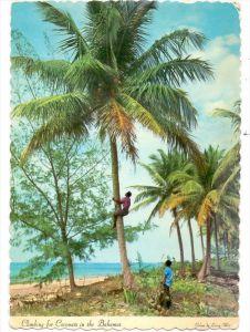 BAHAMAS - Climbing for Coconuts