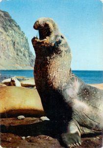 GRÖNLAND / GREENLAND, Havet Elefant, See-Elefant