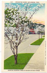 USA - TENNESSEE - GATLINBURG, Springtime Scene