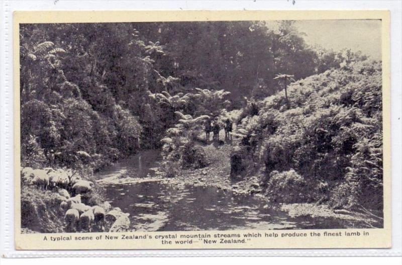 NEW ZEELAND - Sheep Farming / Schafzucht