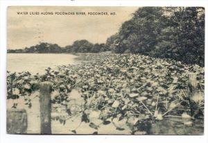 USA - MARYLAND - POCOMOKE, Water Lilies along Pocomoke River, 1934
