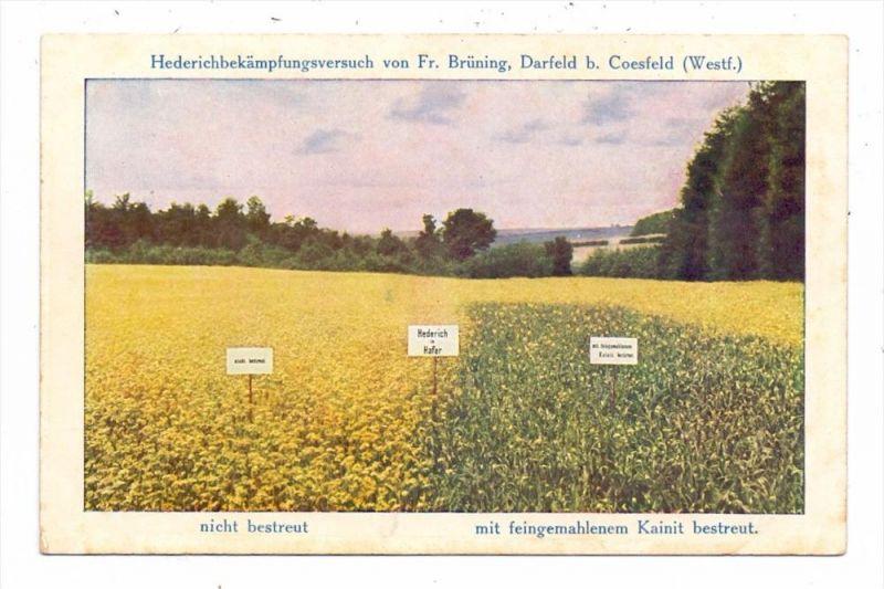 4428 ROSENDAHL - DARFELD, Werbe-AK Fa. Brüning, Hederichbekämpfung