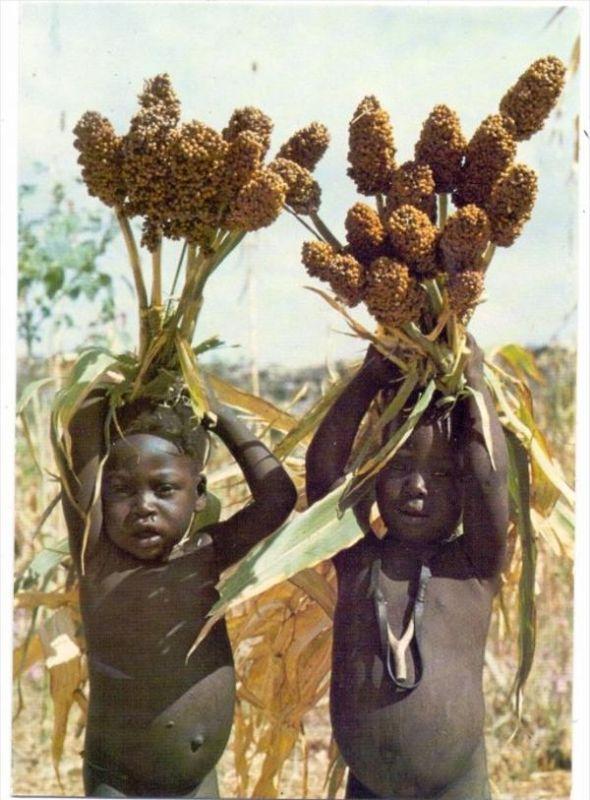 VÖLKERKUNDE / Ethnic - CAMEROUN, La ecolte de mil