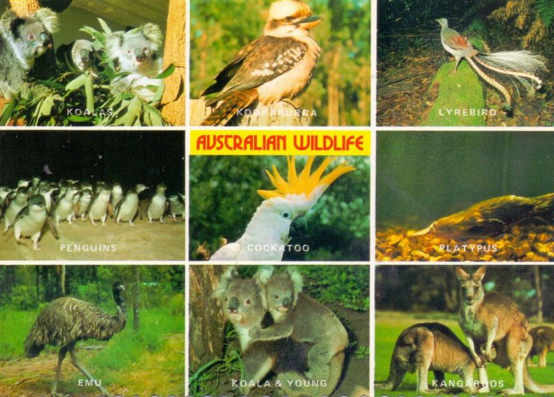 AUSTRALIA - Australian Wildlife