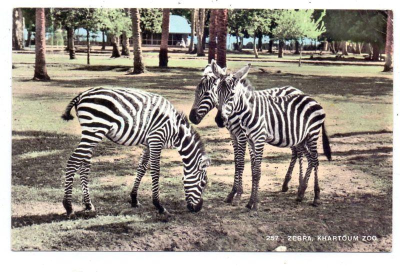 SUDAN - KHARTOUM, Zoo, Zebras