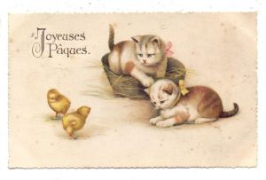 KATZEN / Cats / Chats / Katten / Gatti / Gatos - Junge Katzen und Küken, 192...