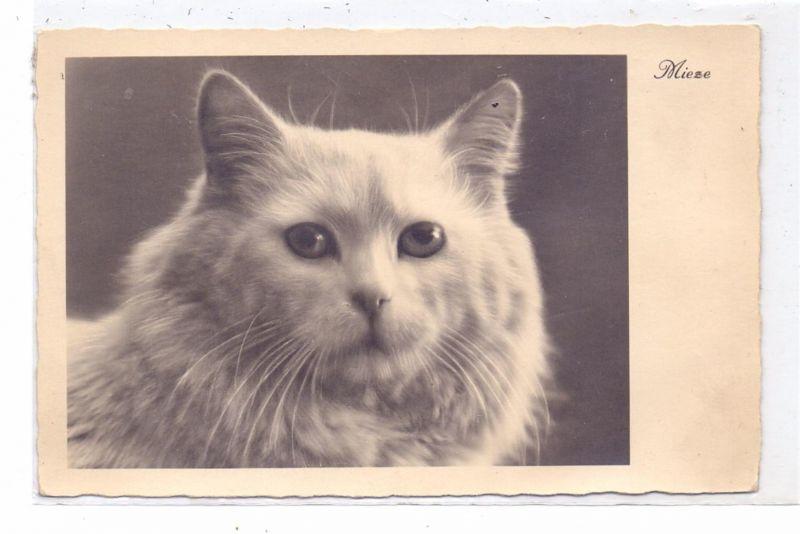 KATZEN / Cats / Chats / Katten / Gatti / Gatos - Katzenkopf