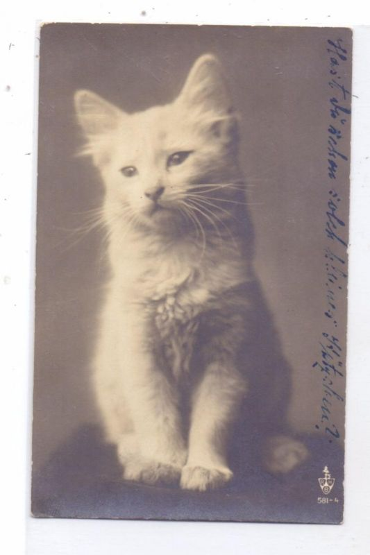 KATZEN / Cats / Chats / Katten / Gatti / Gatos - Weisses Kätzchen