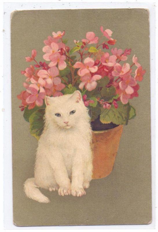 KATZEN / Cats / Chats / Katten / Gatti / Gatos - Weisse Katze vor Blumenstrauss