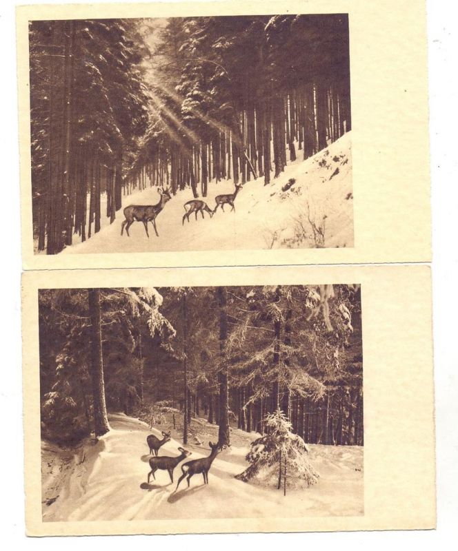 JAGD / Hunting / Jacht / Caccia / Chasse / Caza / Lowiectwo - 4 AK Rehe