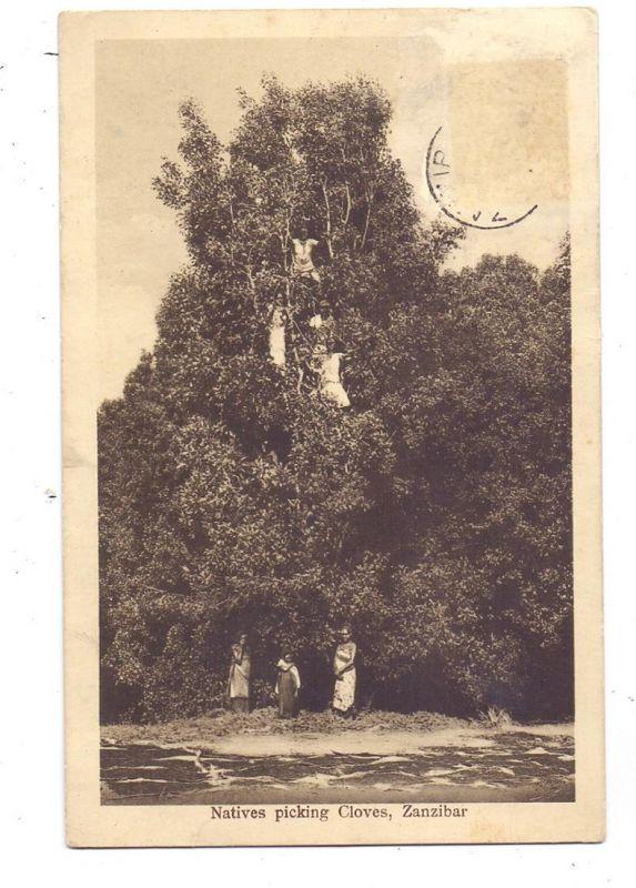 TANSANIA - ZANSIBAR, Natives picking Cloves, 1929