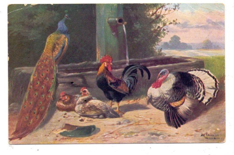 LANDWIRTSCHAFT - GEFLÜGEL / Poultry / Volaille, Hühner, Fasan, Truthahn, Künstler-Karte, 1911, kl. Druckstelle