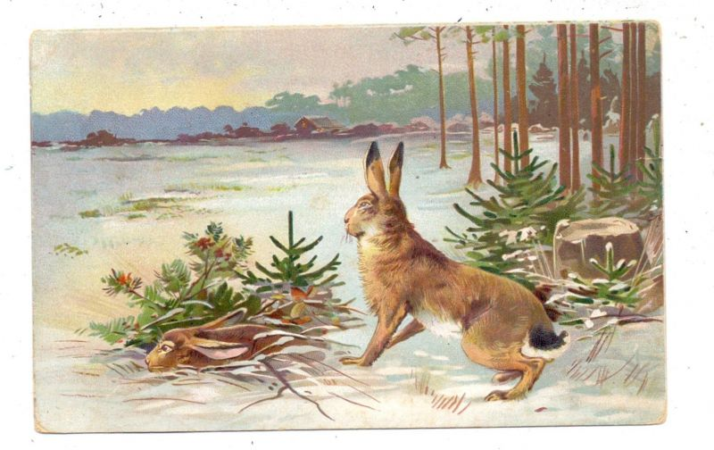 JAGD - HASE im Schnee, Präge-Karte, embossed, relief, 1906