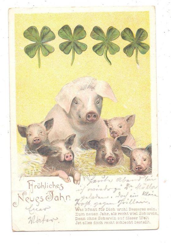 SCHWEINE / Pigs / Porcs  / Varkens / Maiali / Cerdos, Neujahrs Schweine, 1904