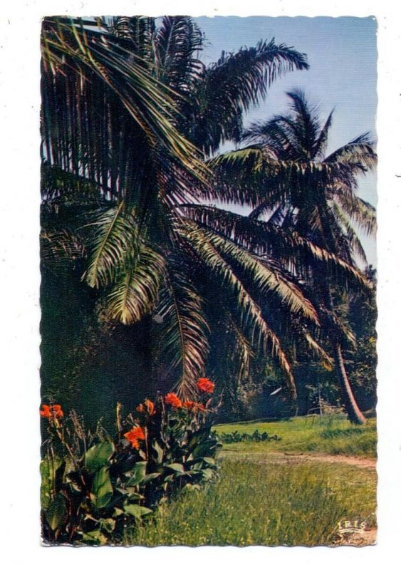 MADAGASKAR / MALAGASY - MAJUNGA, Cocotiers, 1963