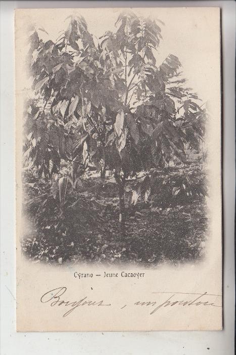 MADAGASKAR - Jeune Cacaoyer, 1900