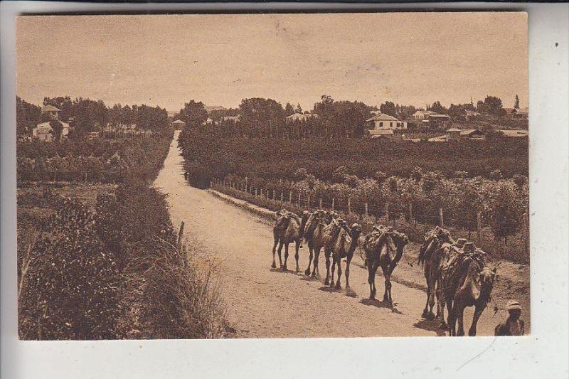 PALESTINA, Orange gardens, Camels, 1921, No. 54