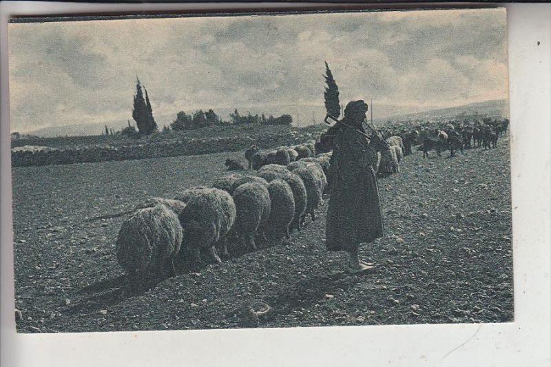 PALESTINA, Sheperd, 1921, No. 7