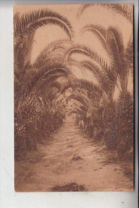 PALESTINA, Palm tree groves, 1921, No. 93