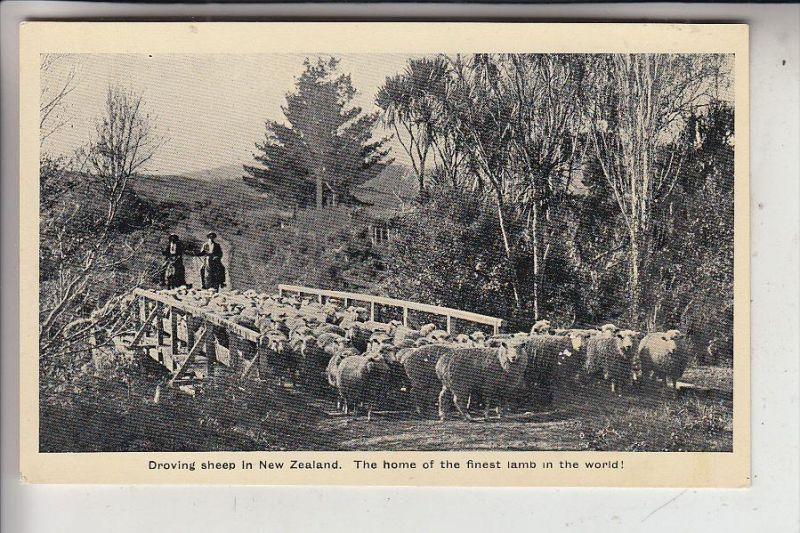 NZ - NEW ZEALAND / Neu Seeland - Droving sheep
