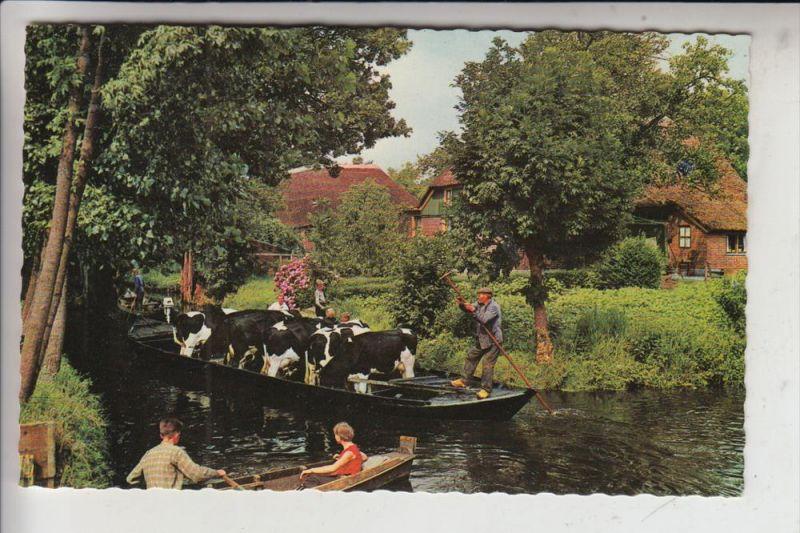 LANDWIRTSCHAFT - Kuhtransport per Boot, Giethoorn / NL, 1965