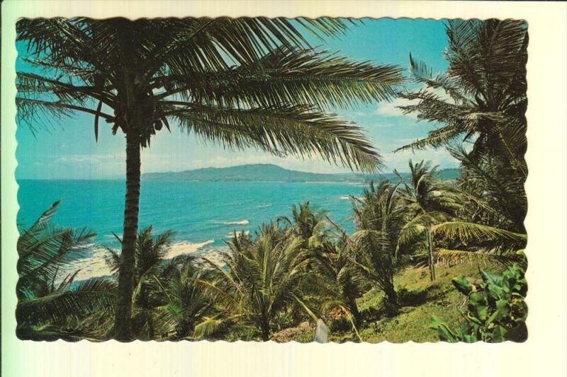 JAMAICA - Palm trees along Jamaica's romantic coast